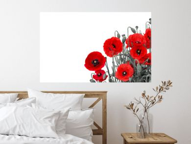 Flowers red poppies (Papaver rhoeas, common names: corn poppy, corn rose, field poppy, red weed, coquelicot ) on a white background with space for text.