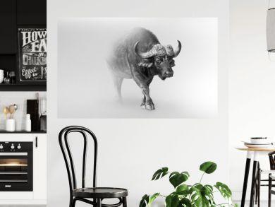 buffalo isolated on white background one of the big 5 animals of africa