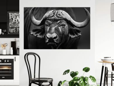 Buffalo bull close up portrait. Black and white. Syncerus caffer fine art