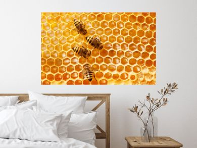Bees on honeycomb.
