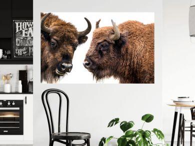 Bison bonasus - European bison - isolated on white