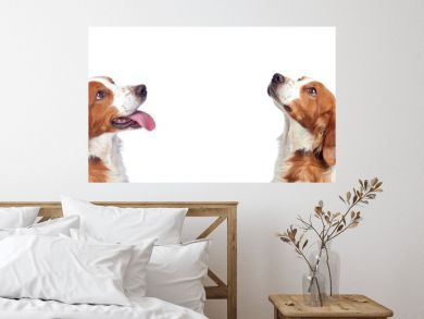 Beautiful portrait of two dogs looking up