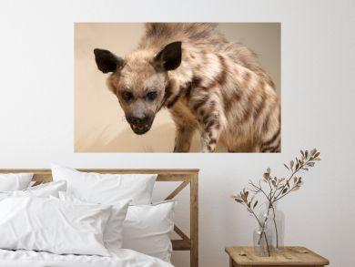 Animals, hyena