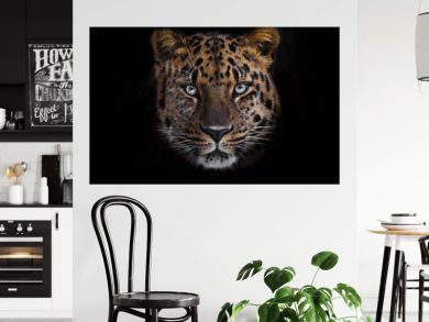 look brutal, lying Amur leopard, powerful motley big cat looks straight through the eyes of a predator.  Isolated on black background.