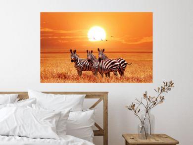African zebras at beautiful orange sunset in the Serengeti National Park. Tanzania. Wild nature of Africa.