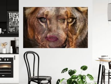 Fenna van der Vliet - She Lion
