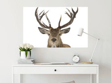 Red deer portrait