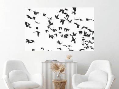 flock of birds isolated on white background and texture, ( Rook and Jackdaw )