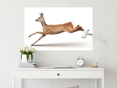 Jump of the Roe Deer (with shadow) isolated on white.