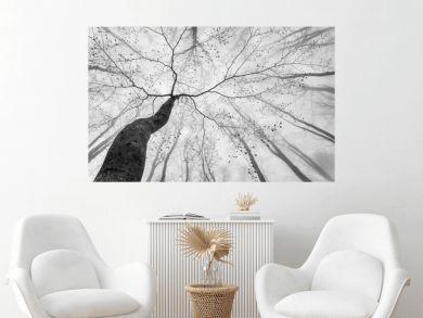 Spring tree crown