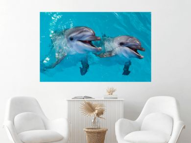Group of cute smart dolphins in the ocean