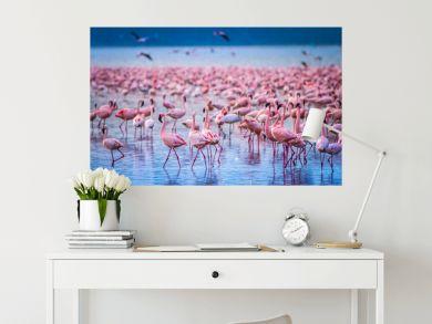 Africa. Kenya. Lake Nakuru. Flamingo. Flock of flamingos. The nature of Kenya. Birds of Africa.