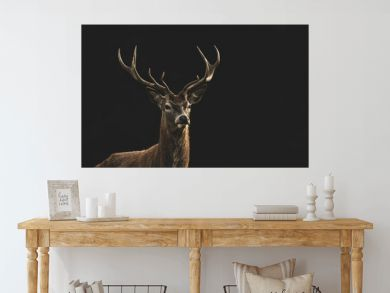 Red Deer (Cervus elaphus) portrait.