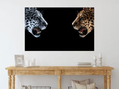 cheetah, leopard, jaguar