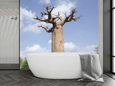 baobab di Grandidier