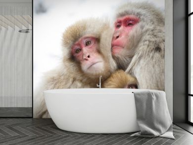 厳冬に耐え子どもを守り寄り添う猿の家族