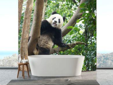 panda climbing up on the tree looking around