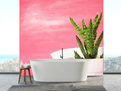 """Aloe juvenna (The """"Tiger-tooth Aloe"""") planted on a white pot, shot on pink background"""