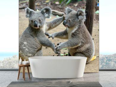 Two koalas on the ground