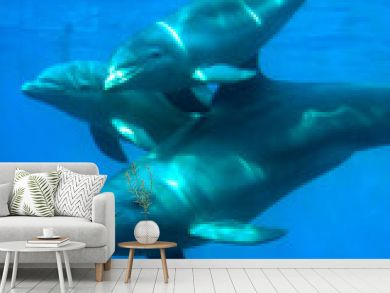 delfines - 1