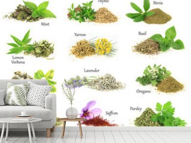 Collection of fresh and dry aromatic herbs
