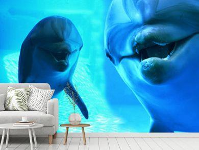Denizde Yunus Balıkları