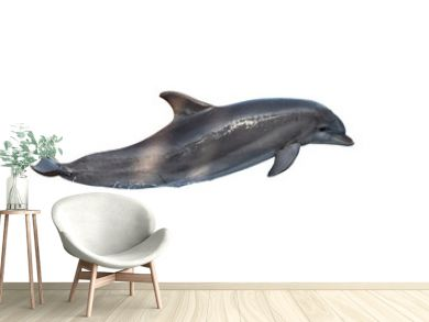 A bottlenose dolphin isolated on white background
