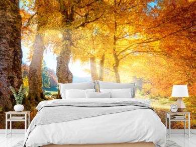 Warm autumn landscape -  beautiful forest with the sun rays and golden trees