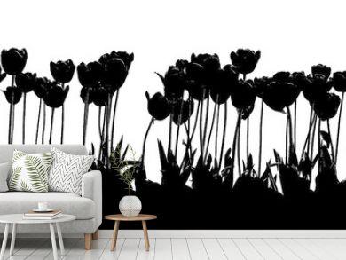 tulip 2color black