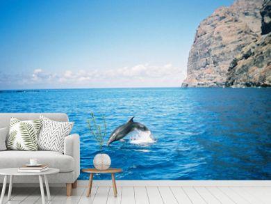 bottle nosed dolphin, tenerife