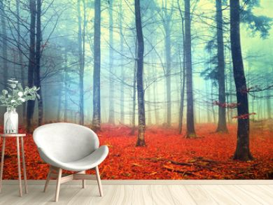 Autumn light forest scene