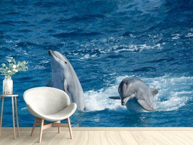 Two dolphins playing during performance in the ocean park