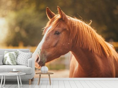 horse in the paddock, Outdoors, rider