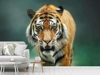 Wild animal Tiger portrait