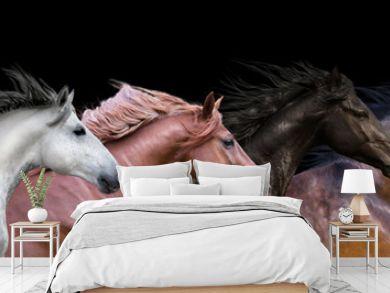 Six horses portraits isolated on a black background