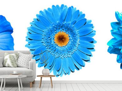 3 surreal exotic high quality blue flowers macro isolated on white. Greeting card objects for anniversary, wedding, mothers and womens day design