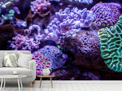 Underwater coral reef landscape background in the deep lilac ocean
