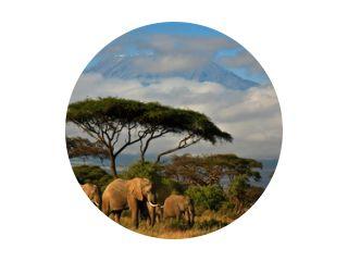 Olifantenfamilie voor de Kilimanjaro