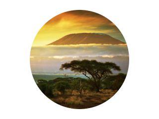 Kilimanjaro berg. Savanne in Amboseli, Kenia