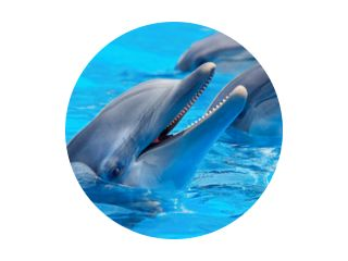 Drie mooie en grappige dolfijnen