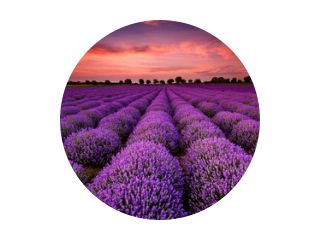 Prachtig landschap met lavendelveld bij zonsondergang