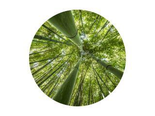 bamboebos - verse bamboeachtergrond
