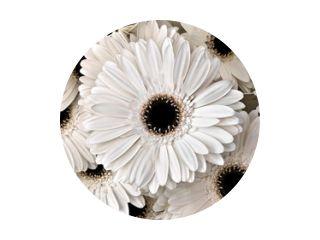 Een boeket gerbera& 39 s. Bloemen achtergrond.