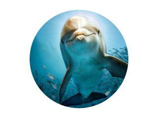 dolfijn onder water op rif komt dichtbij jou