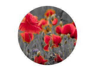 panorama van klaprozen en wilde bloemen, selectieve kleur, rood en zwart