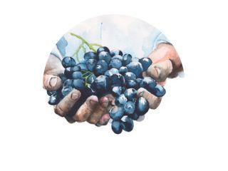 Druiven in handen aquarel illustratie geïsoleerd op een witte achtergrond