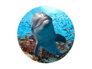 dolfijn onderwater op rif close-up kijken