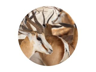Antilopeportret uit de kudde!