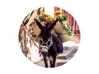 Grappige Mexicaanse ezel met glazen stoffen en bloemen