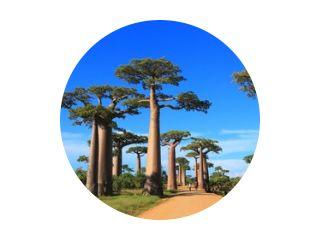 Baobab snelweg